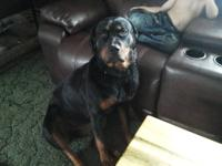 AKC Reg Rottweiler Female!! Bristol is a very nice