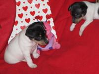 WE ARE EXPECTING A LITTER OF CHAMPION BRED AKC reg.