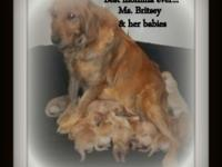 7 Males & & 2 Girls doggies offered. Born Feb 6 ready