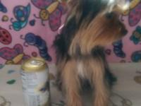 I have a female Yorkie that needs a new house. She was