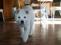 Very sweet affectionate female. She is AKC registered,