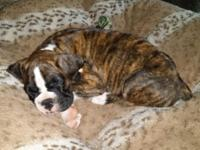 We have some beautiful Boxers for Sale, 1 female