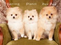 We have 3 adorable, beautiful female Pomeranian