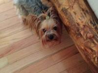 I have a 2 year old AKC registered female Yorkie for