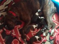 We are accepting deposits on AKC registered Boxer