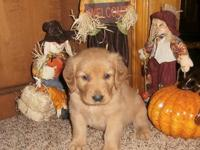 Puppies were born Sept 12, 2013 We have 2adorable male
