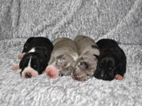 I have 3 beautiful puppies available, they were born