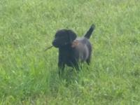 We have 4 puppies left ready for a new home. Have been