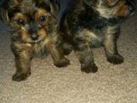 I have 2 children and 1 woman left. Akc Registered with