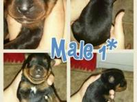 3 males and 1 female available. They will be ready for