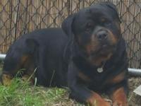 Taking deposits on Rottweiler puppies. Ready to take
