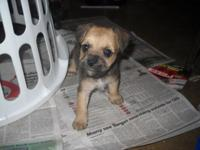 I HAVE THIS GIRL YOUNG PUPPY Available For Sale, I