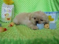We have 4 lovely AKC Male Shih Tzu puppies available.