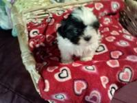 I have one boy and three girls they are akc and come