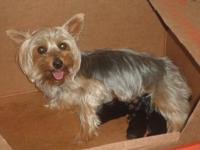 I have two AKC registered male silky terrier puppies