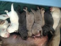 This litter born on Feb. 22nd is a mix of color and