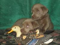 they are AKC registered they will have there first