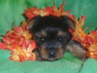 Sweet Small size females available, dob 7/19 Taking