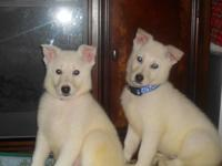 Stunning snow white infants ready for their forever