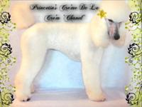 CHECK OUT OUR WEBSITE www.princetinpoodles.com (for