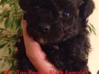 AKC Teacup, Tiny Toy, & & Toy Poodles. Only 2 left !!