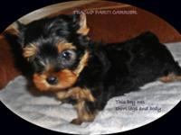AKC Registered male available to loving home. This