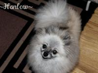 Please see our site: www.onelovepoms.webs.com. Harlow.