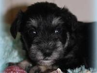 This little girl is Lilly. She is a small toy black and