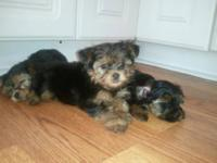 I have five toy poodle puppies that have been vet