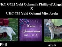AKC/ UKC Siberian husky puppies Heppner, OR $800 Due