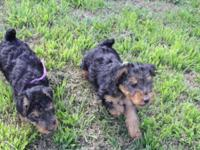I have one male and one female puppy available. This is