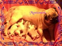 I am located in Tennessee. I have a litter of 5 pug