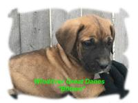 We have two litters available, 6 weeks old and 4 weeks