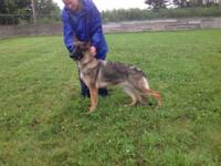 One wonderful female Pup available! She is up-to-date