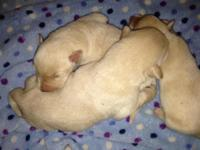 We have 3 Ylw male puppies lefted out of a litter of 11