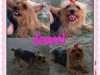 I have a AKC yorkie I also have her AKC papers she is