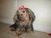 I have a beautiful AKC registered yorkie female. She is
