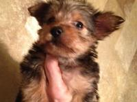 I have a adorable AKC female Yorkie puppy fore sale she