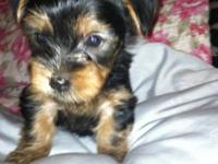 I have a sweet female yorkie puppy. She will be ready