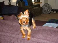 I HAVE MOTHER AND FATHER YORKIES MOTHER IS DUE TO HAVE