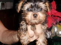 Inquire about number 1 puppy when calling. AKC male