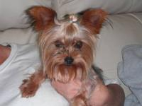 I have Champion AKC Yorkies I have reduced the price to