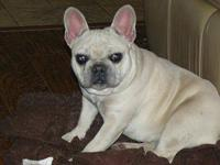 we have a sweet little french bulldog up to date on