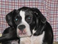 American kennel club register puppies I have one