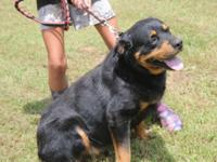 KENNEL DOWN SIZING MOVING SALE !!!!!!! Meet Buster,