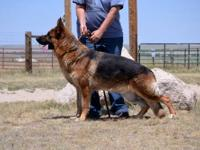 WE ARE A PROFESIONAL BREEDING AND TRAINING KENNEL. WE