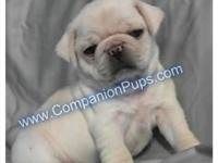 We have white and silver white pug puppies available!!!