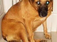 Akita - Daisy - Medium - Adult - Female - Dog Daisy (f)