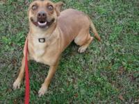 Akita - Lacey - Medium - Adult - Female - Dog is a Mix