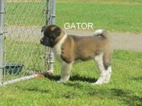 GATOR is a great male out of Tasha and Toby. Both